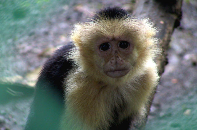 Sad_monkey